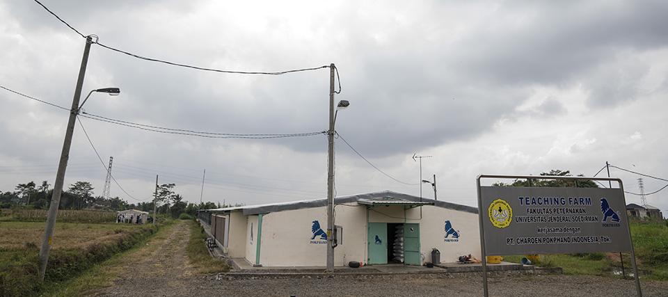 Kandang Ayam Closed House